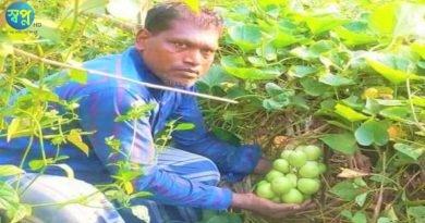 নোয়াখালী চাটখিলে এক থোকাতে