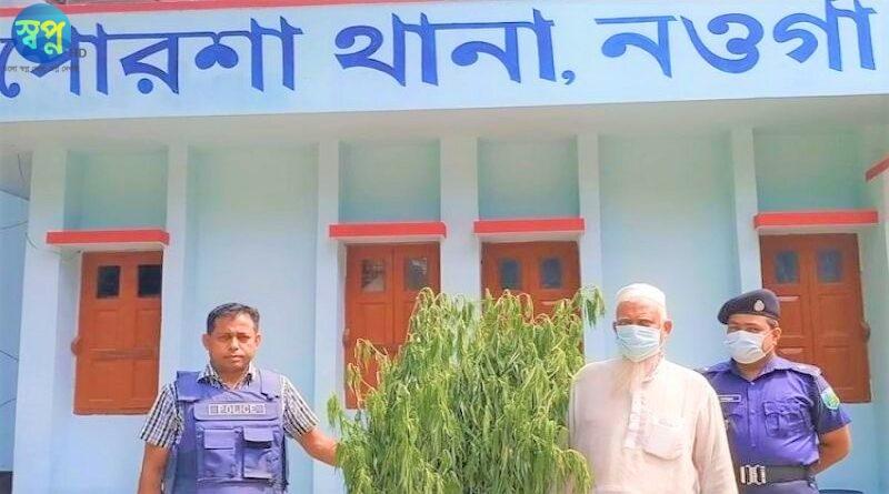 নওগাঁর পোরশায় গাজা গাছসহ